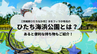 ネモフィラ コキア 茨城県 ひたち海浜公園 持ち物